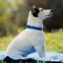 Collier apaisant chien
