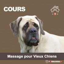 Cours Massage pour Vieux Chiens