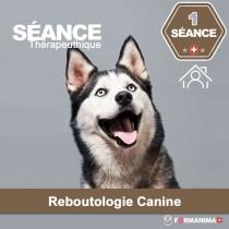 Séance de Reboutologie Canine à...