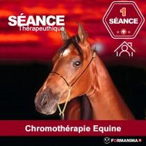 Séance de Chromothérapie Equine