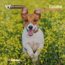 Cours aromathérapie pour animaux