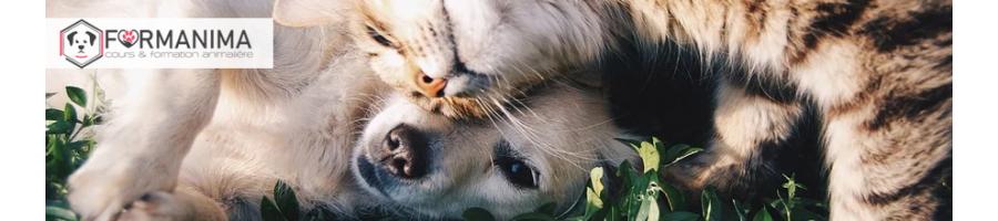 Formation en ligne  et Cours en Massage Canin à Distance | Formanima