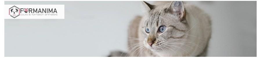 Nourriture maison chat, nourriture fraiche   Livraison à domicile