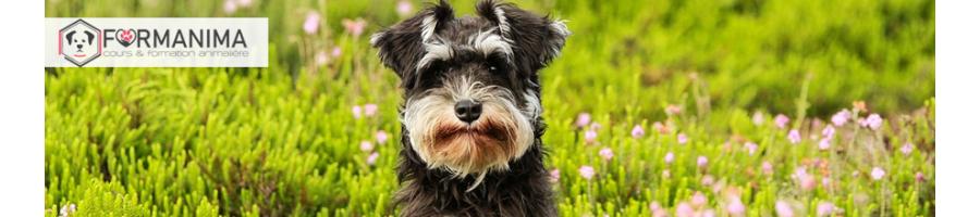 Formation et Cours Aromathérapie pour animaux | Formanima n°1 en Suisse