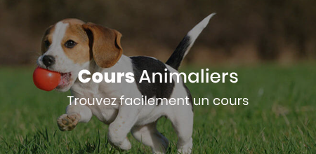 Cours Animalier