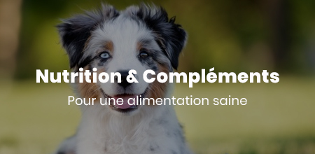 Formation Animaux